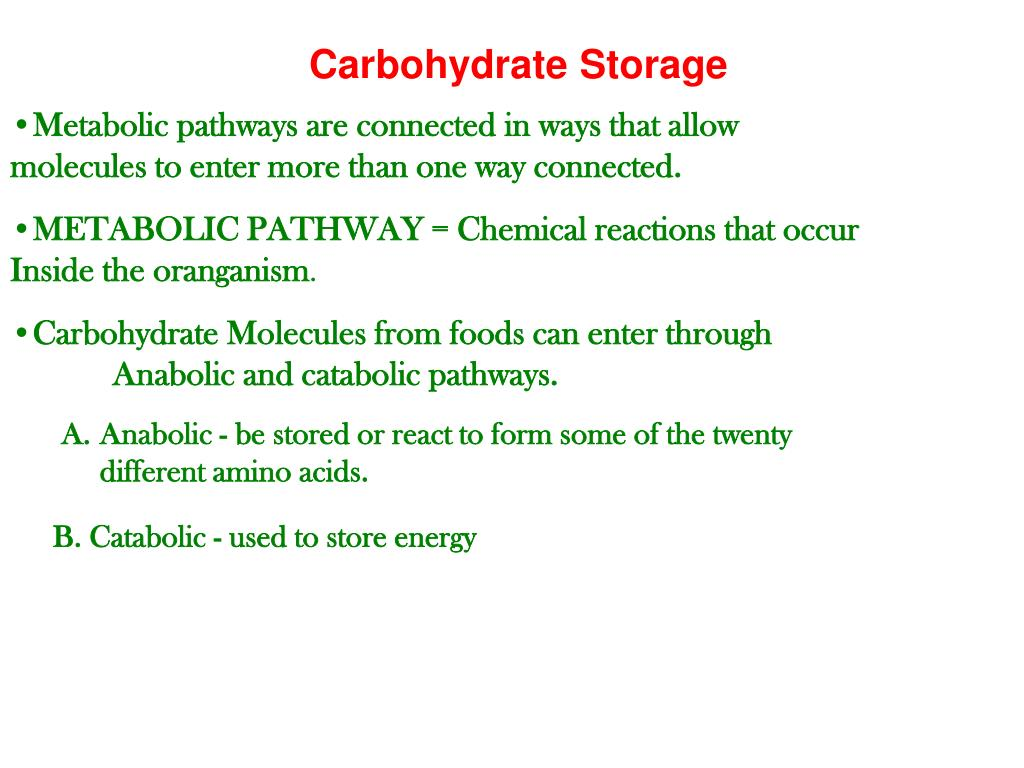 Carbohydrate Storage