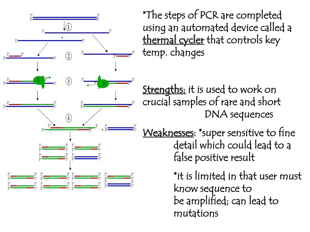 *The steps of PCR are completed using an automated device called a