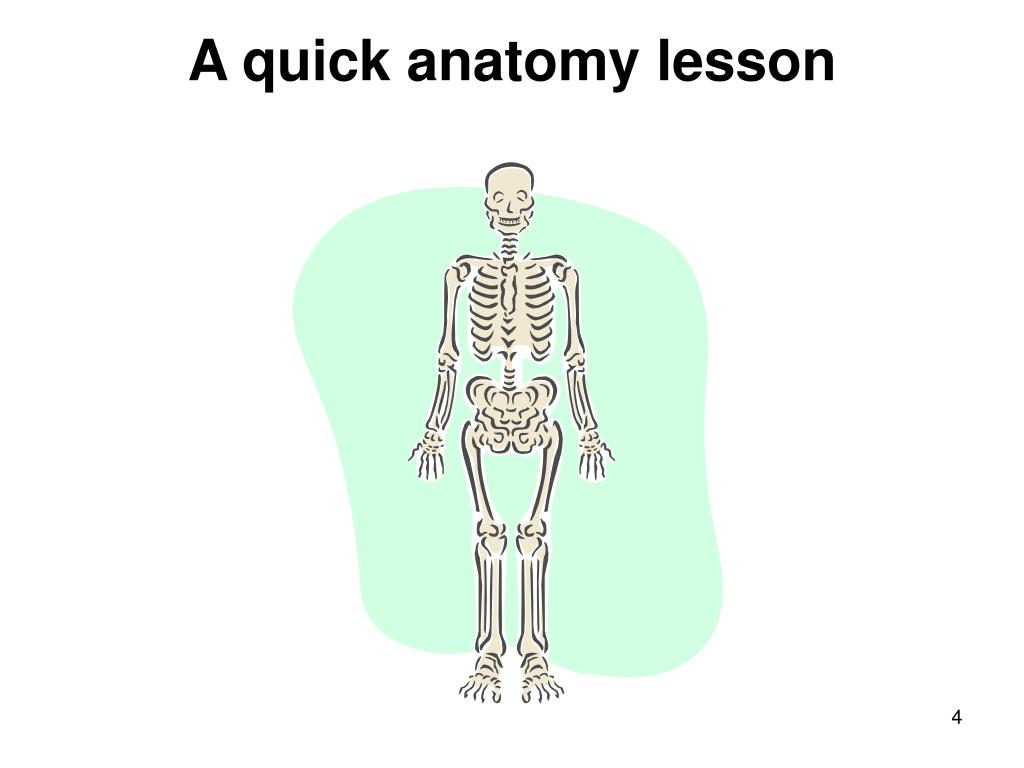 A quick anatomy lesson