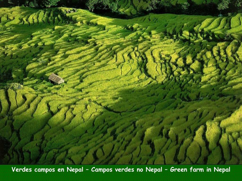 Verdes campos en Nepal – Campos verdes no Nepal – Green farm in Nepal