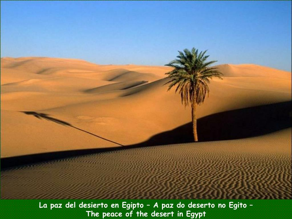 La paz del desierto en Egipto – A paz do deserto no Egito –