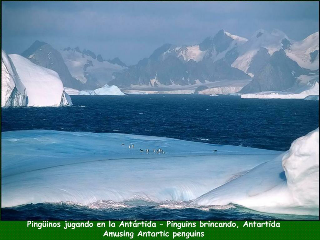 Pingüinos jugando en la Antártida – Pinguins brincando, Antartida