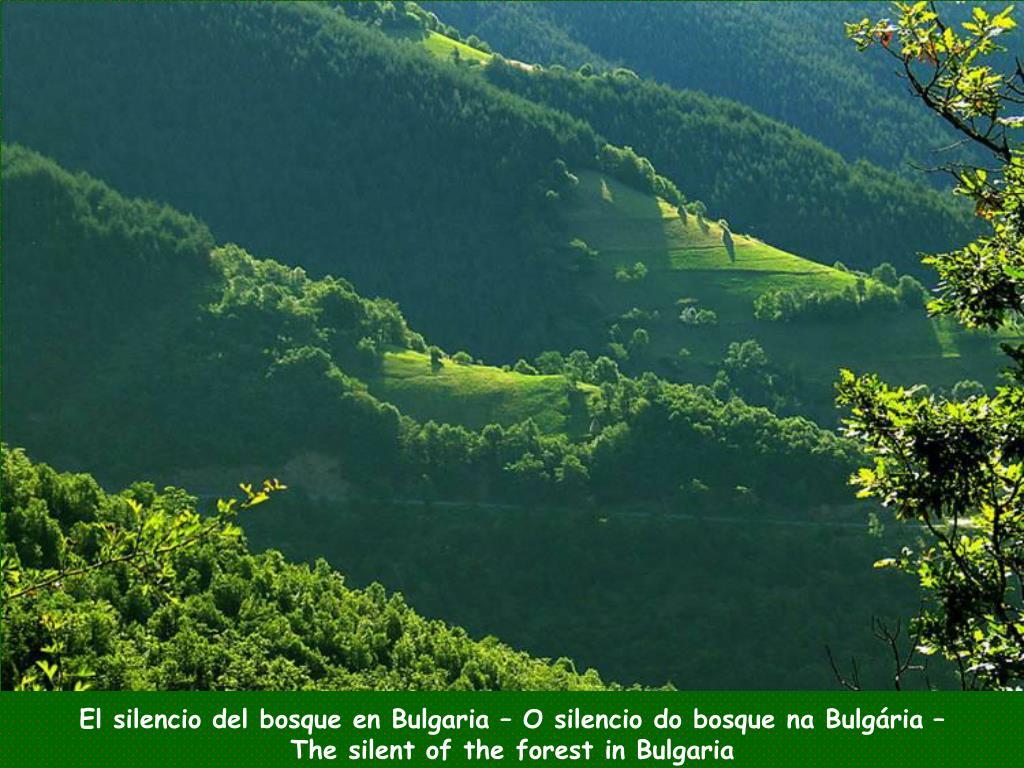 El silencio del bosque en Bulgaria – O silencio do bosque na Bulgária –