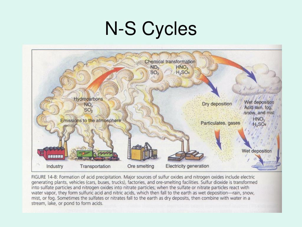 N-S Cycles