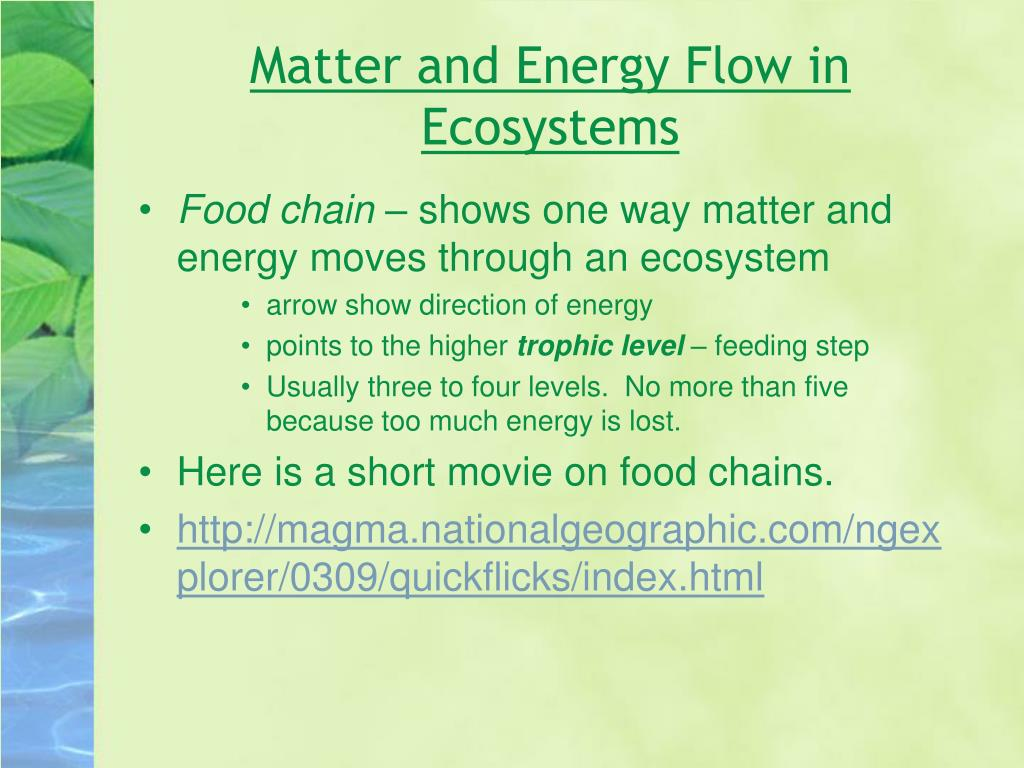 Matter and Energy Flow in Ecosystems
