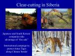 clear cutting in siberia