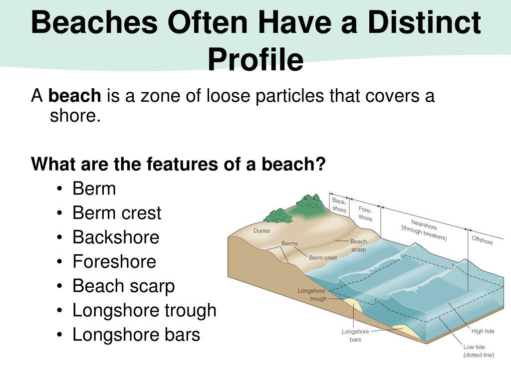 Beaches Often Have a Distinct Profile