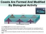 coasts are formed and modified by biological activity