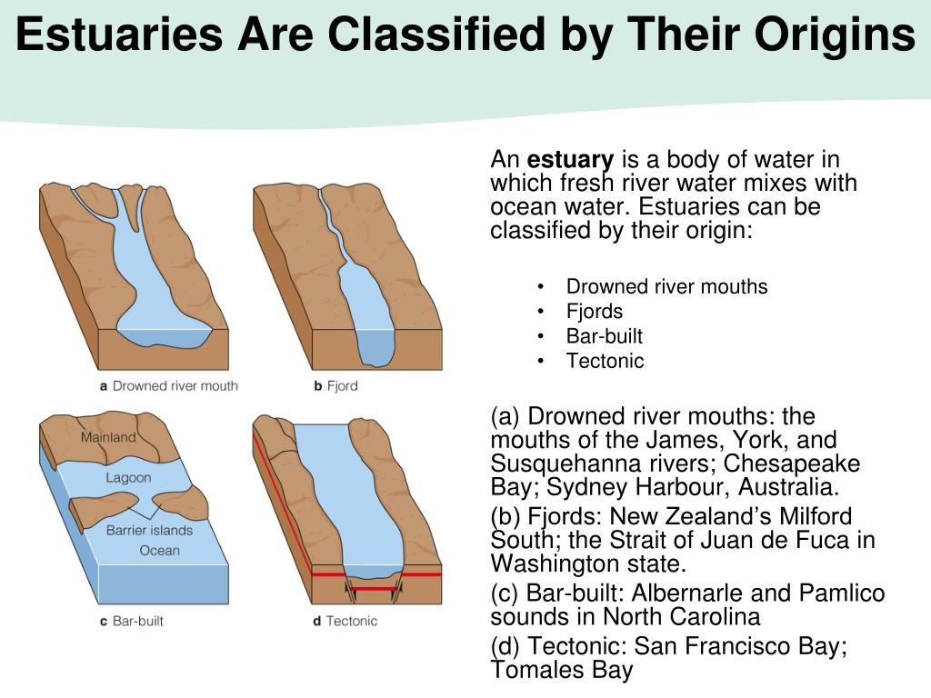 Estuaries Are Classified by Their Origins