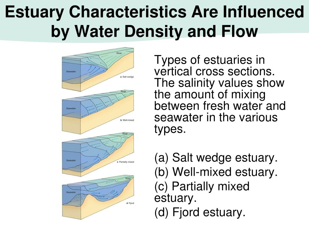 Estuary Characteristics Are Influenced by Water Density and Flow