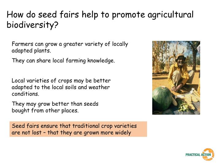 How do seed fairs help to promote agricultural biodiversity