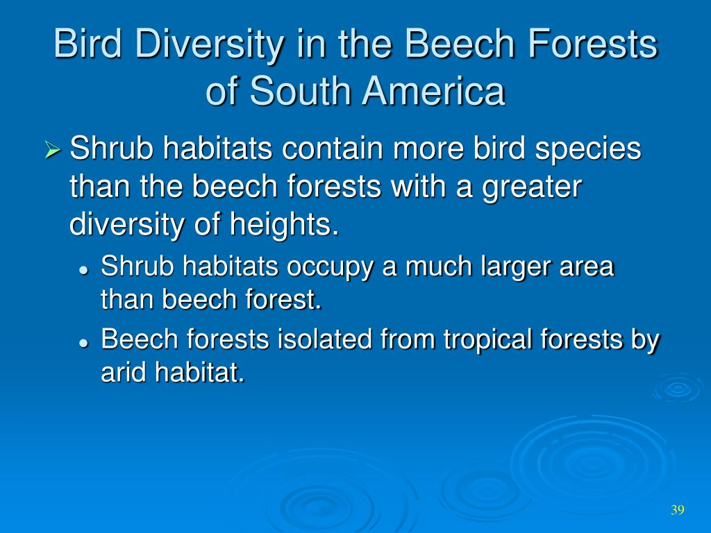 Bird Diversity in the Beech Forests of South America