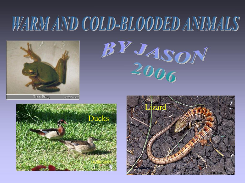 PPT - WARM AND COLD-BLOODED ANIMALS PowerPoint ...