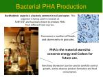 bacterial pha production
