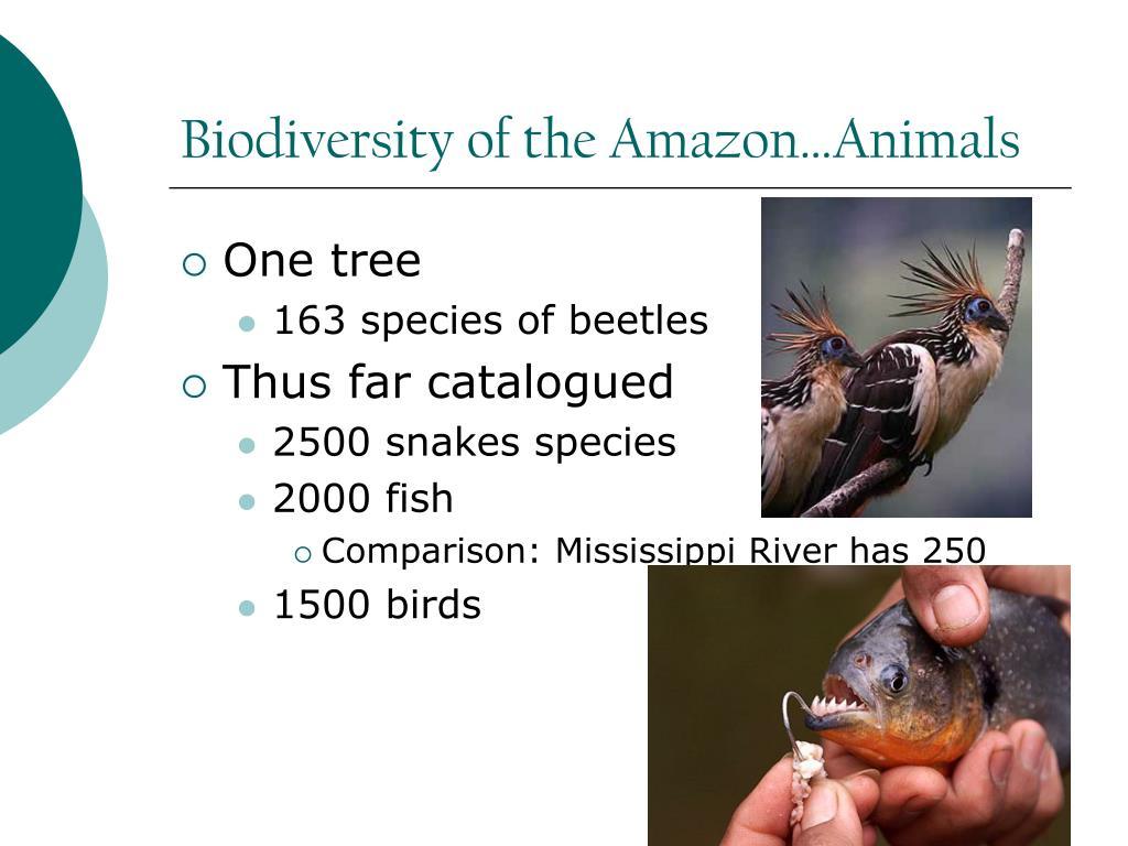 Biodiversity of the Amazon…Animals