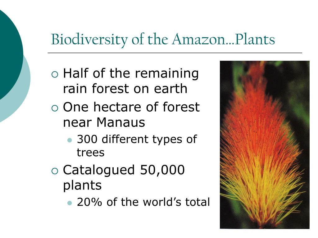 Biodiversity of the Amazon…Plants