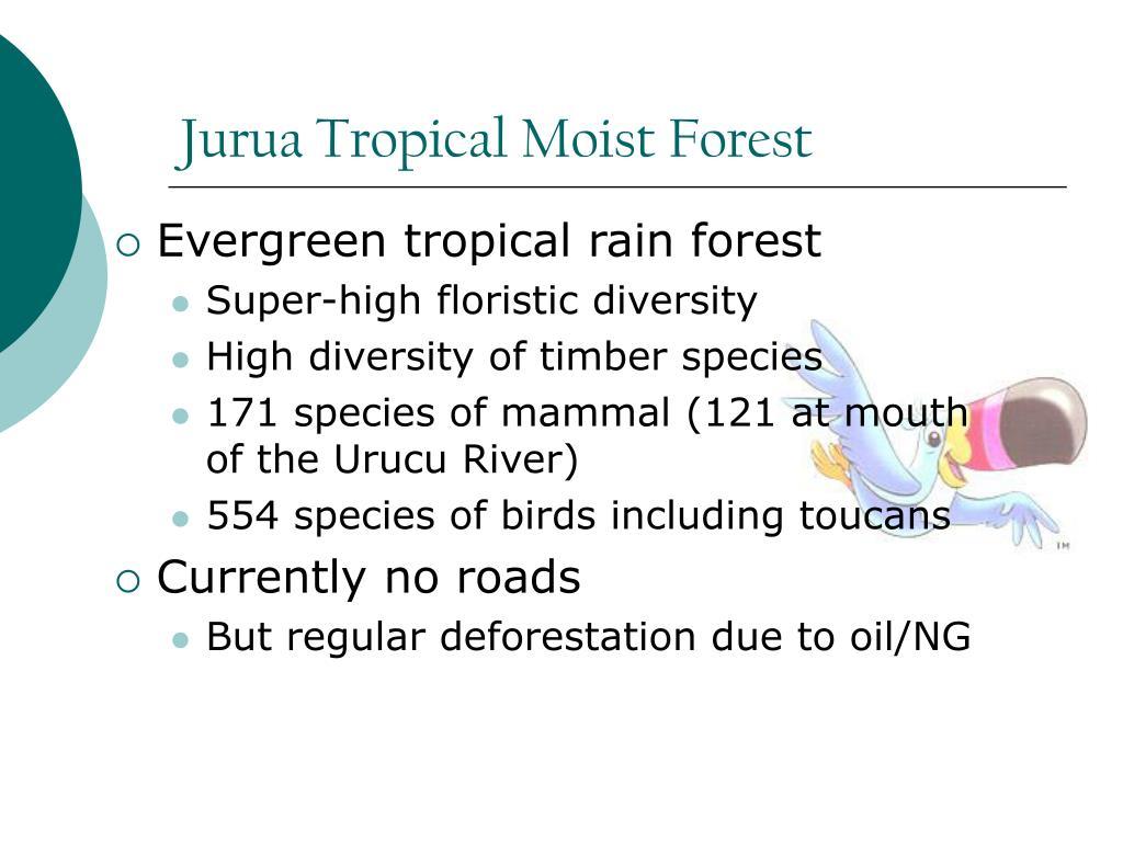 Jurua Tropical Moist Forest