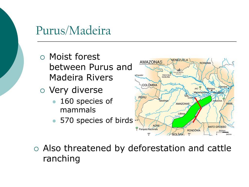 Purus/Madeira