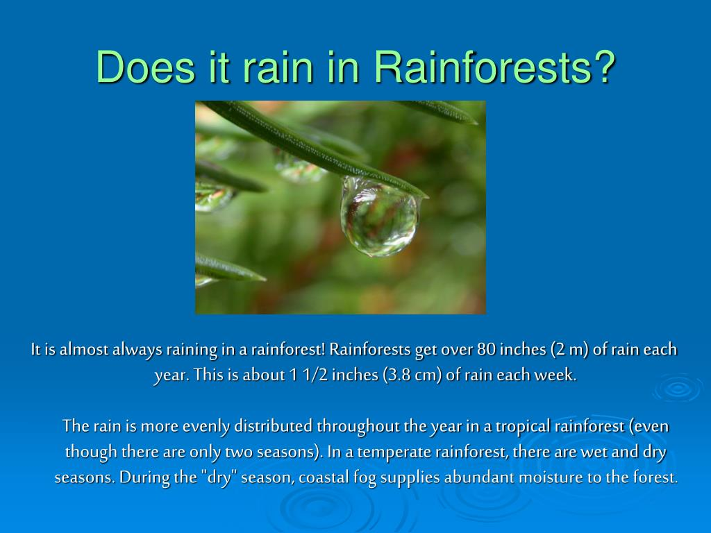 Does it rain in Rainforests?