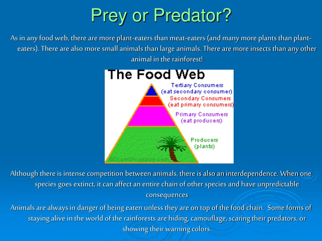 Prey or Predator?
