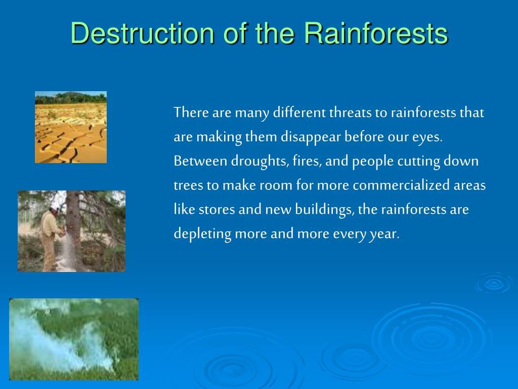 Destruction of the Rainforests