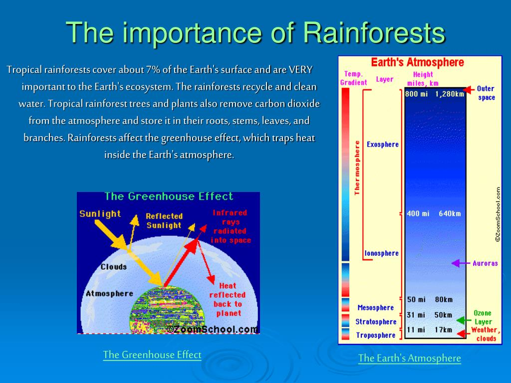 The importance of Rainforests