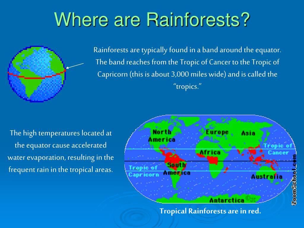 Where are Rainforests?
