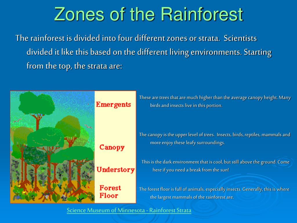 Zones of the Rainforest