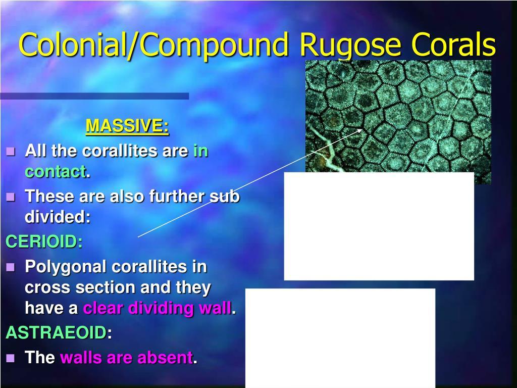 Colonial/Compound Rugose Corals