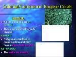 colonial compound rugose corals10