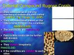 colonial compound rugose corals9