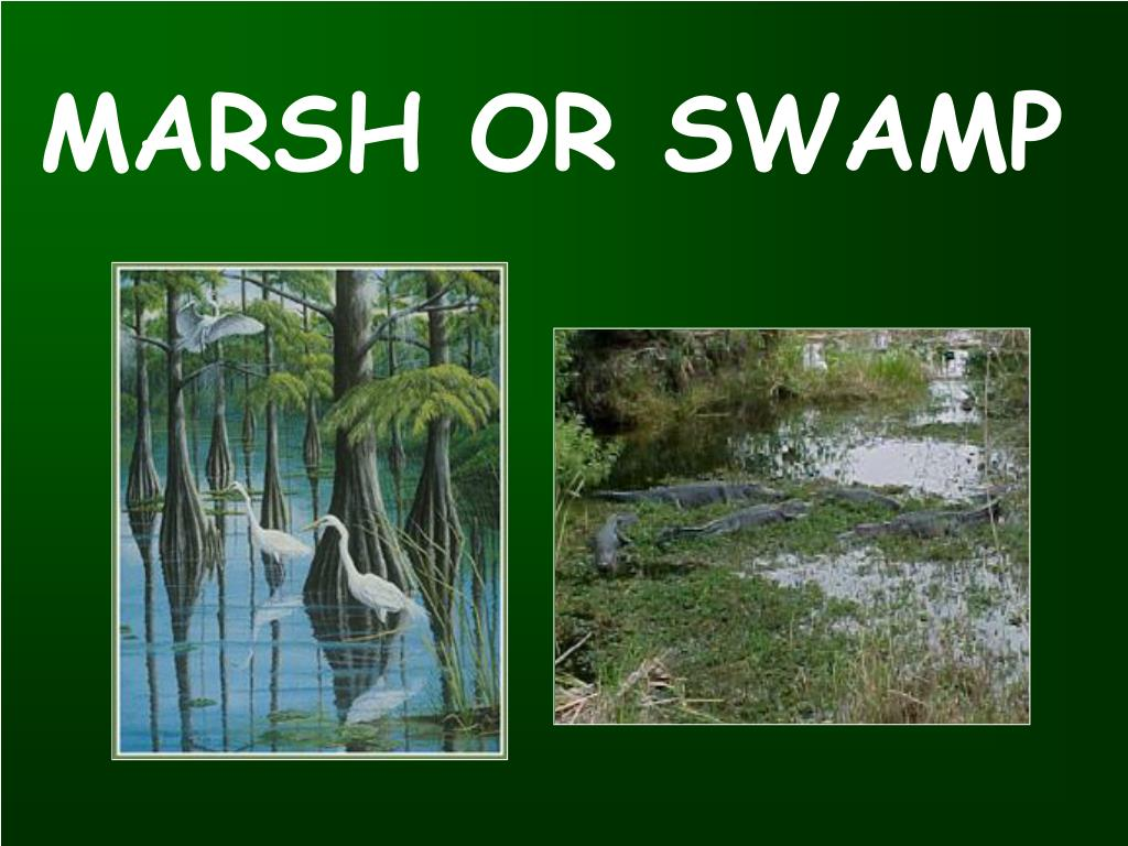 MARSH OR SWAMP