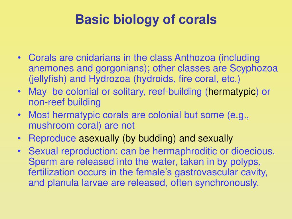 Basic biology of corals