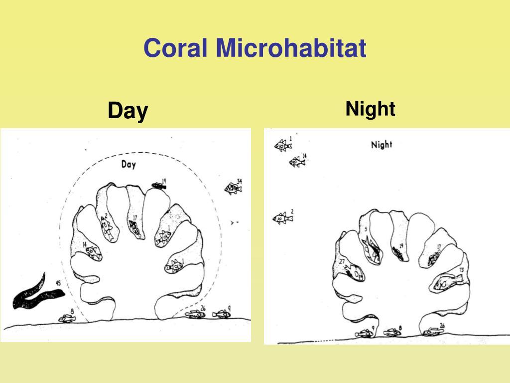 Coral Microhabitat