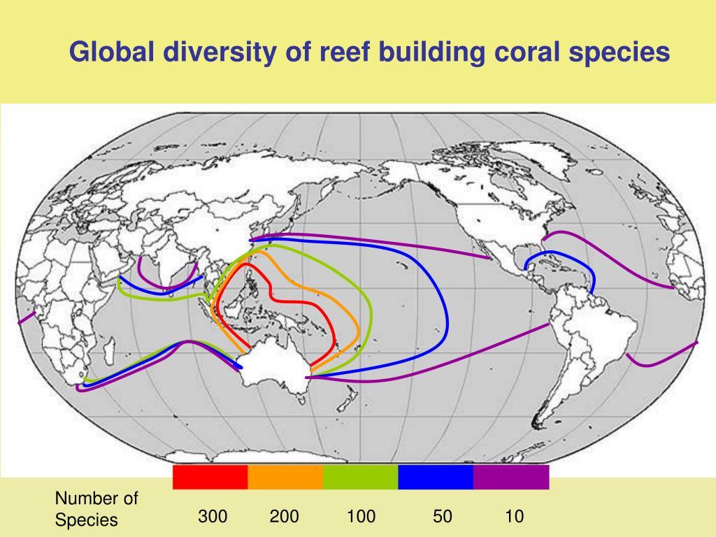 Global diversity of reef building coral species