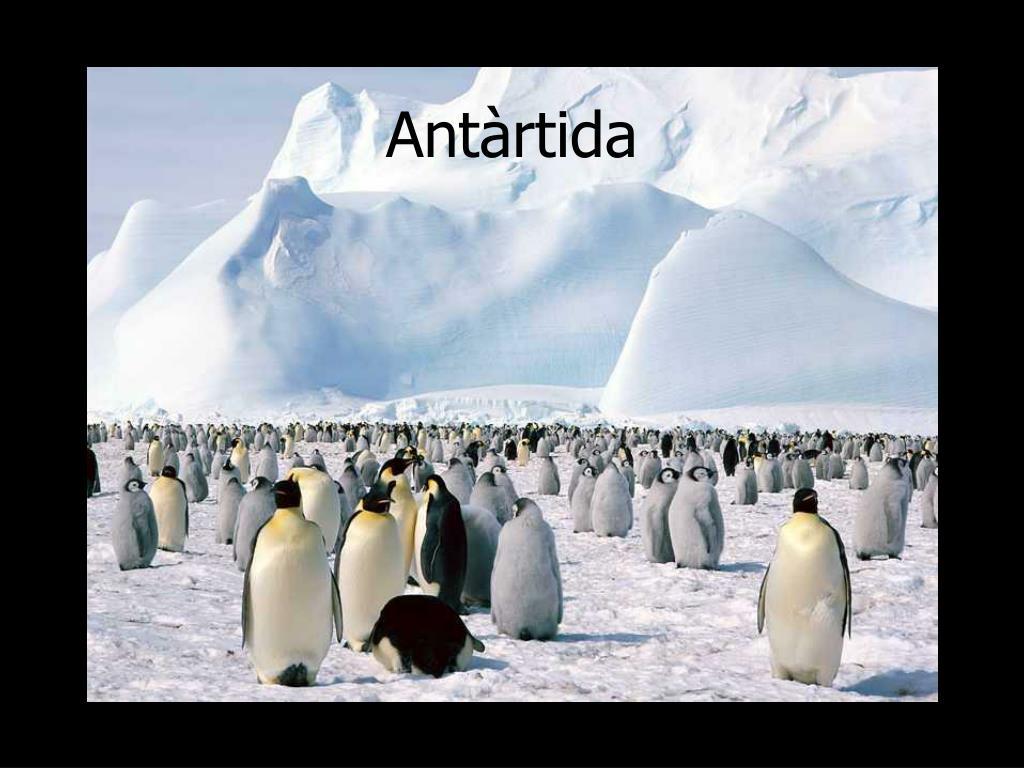 Antàrtida