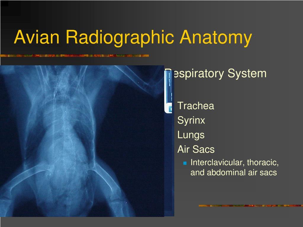 Avian Radiographic Anatomy