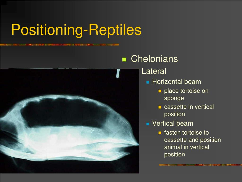 Positioning-Reptiles