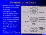 formation of the ovary