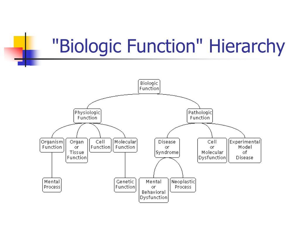 """""""Biologic Function"""" Hierarchy"""