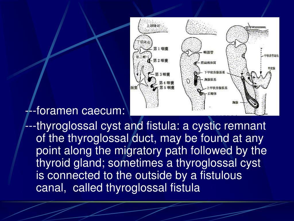 ---foramen caecum: