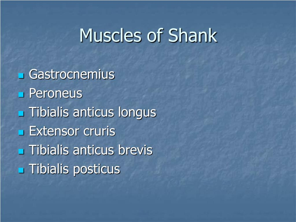 Muscles of Shank