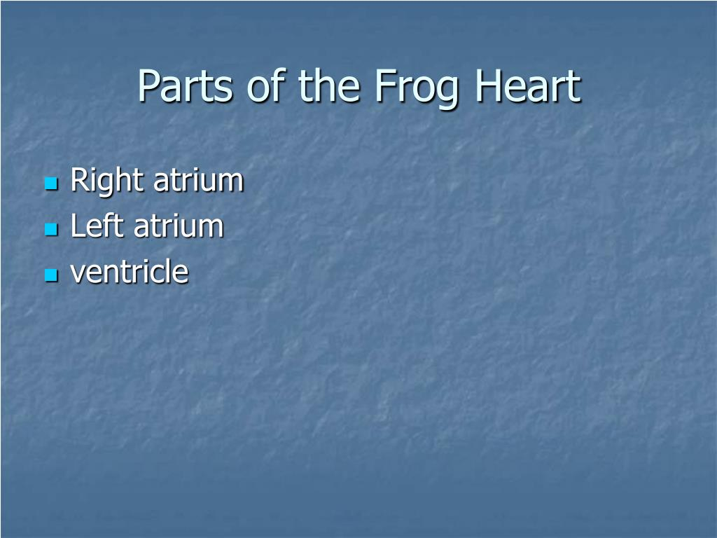 Parts of the Frog Heart