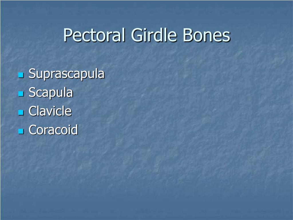 Pectoral Girdle Bones