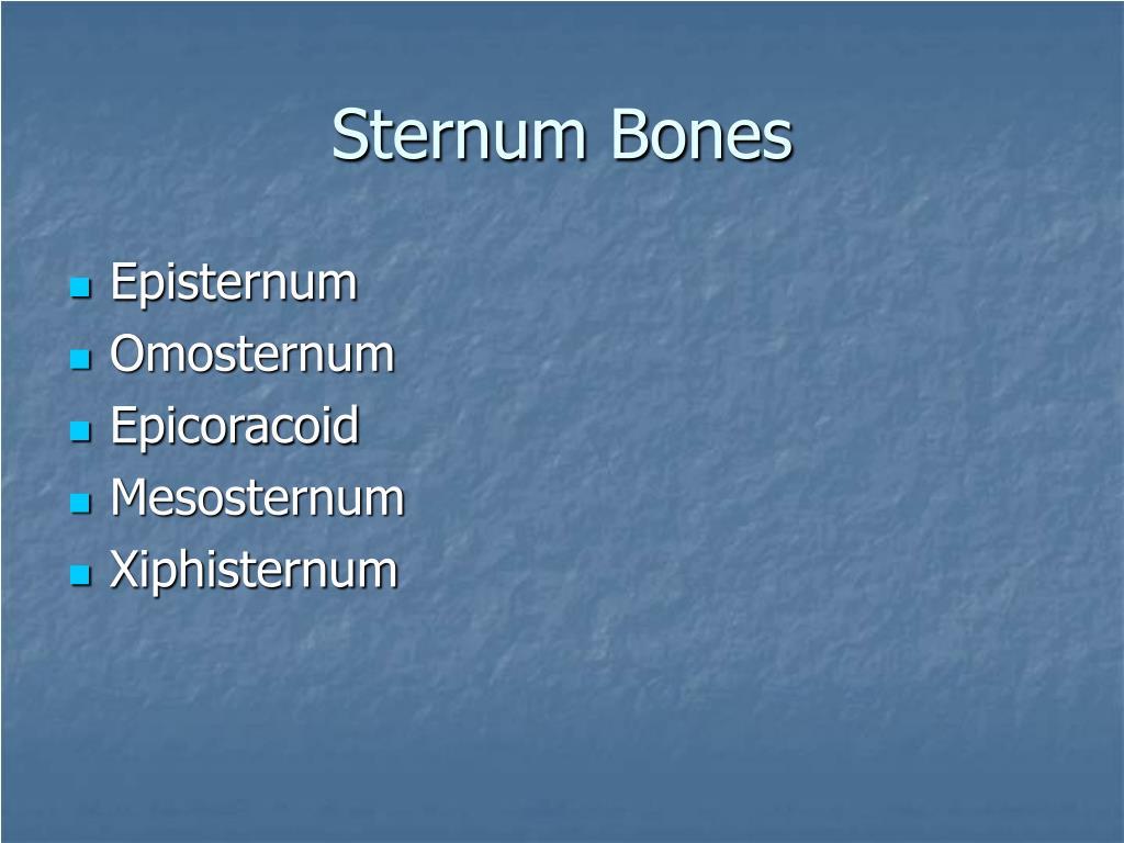 Sternum Bones