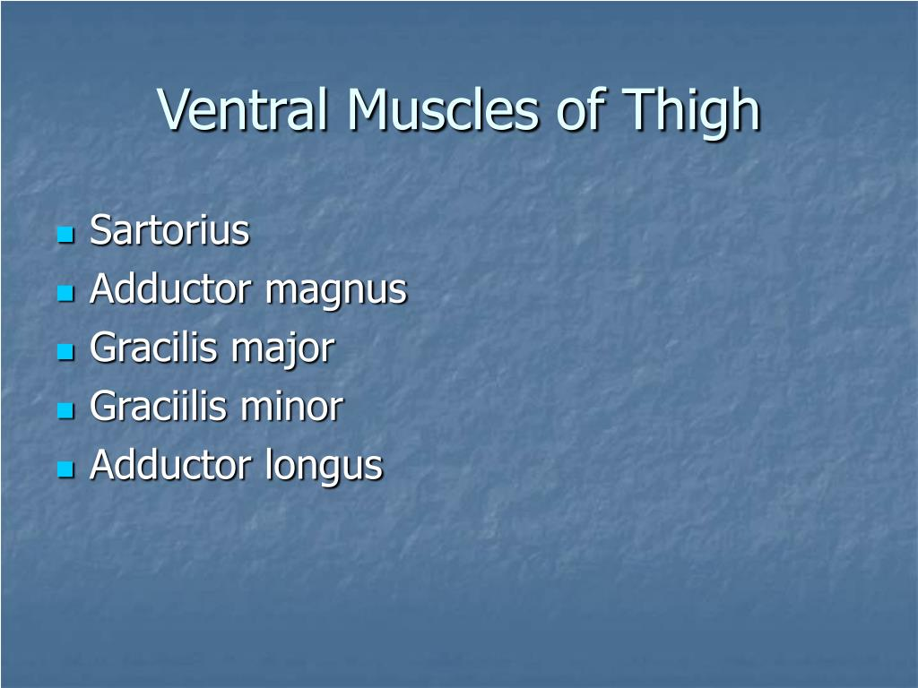 Ventral Muscles of Thigh