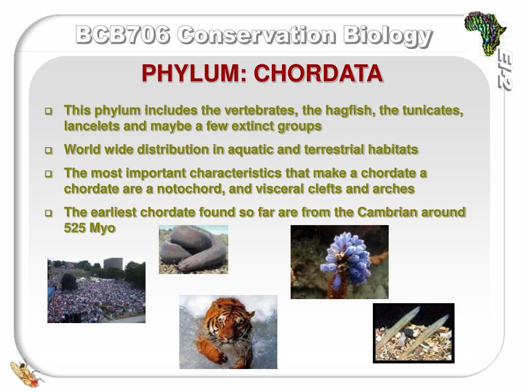 PHYLUM: CHORDATA
