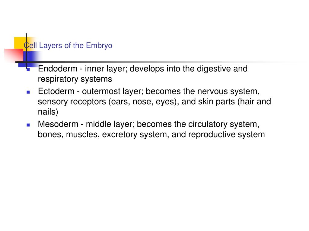 Cell Layers of the Embryo