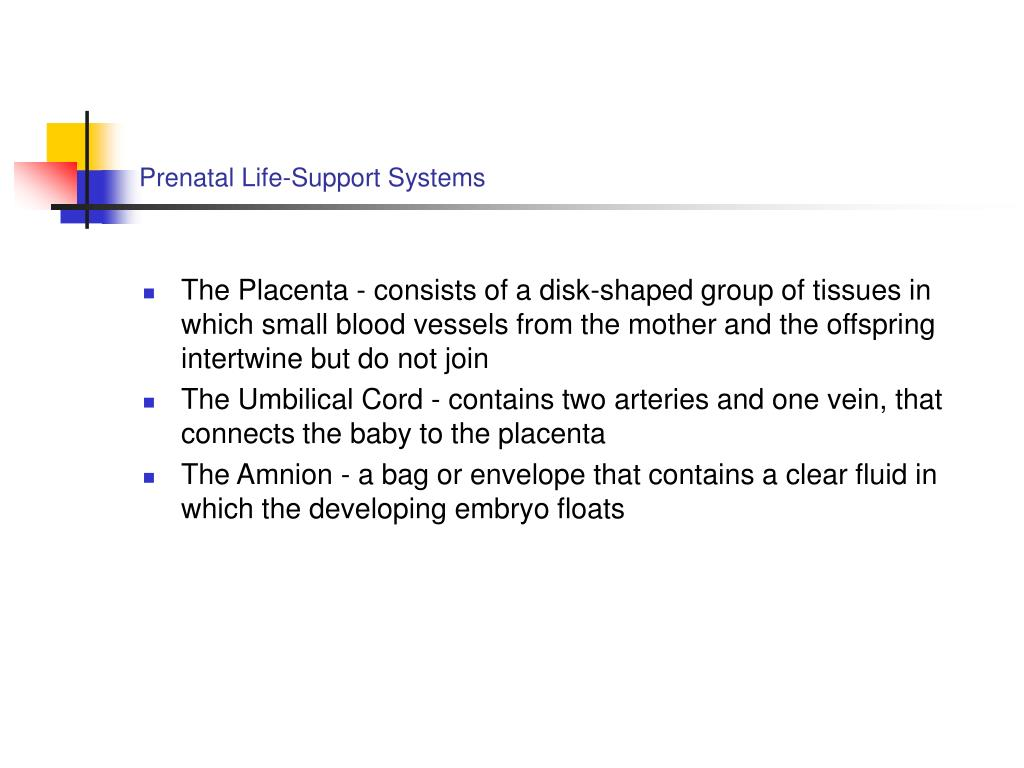 Prenatal Life-Support Systems