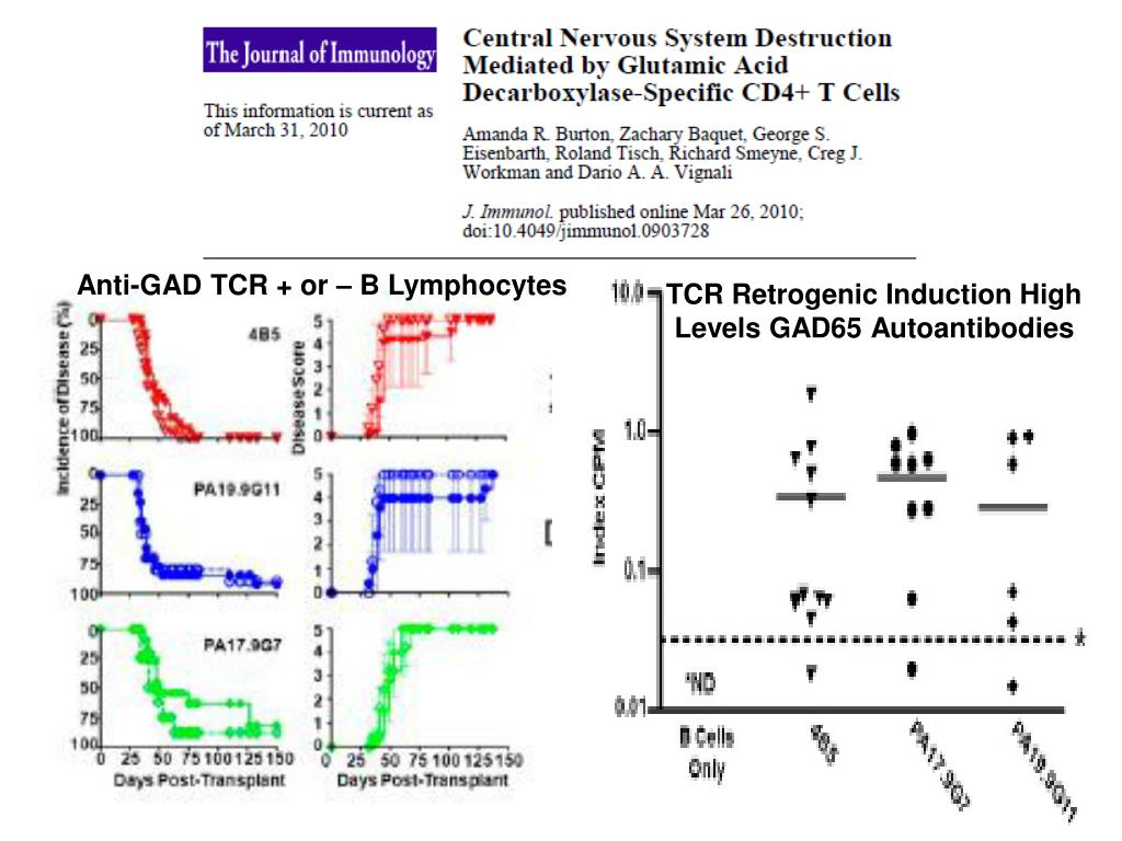 Anti-GAD TCR + or – B Lymphocytes
